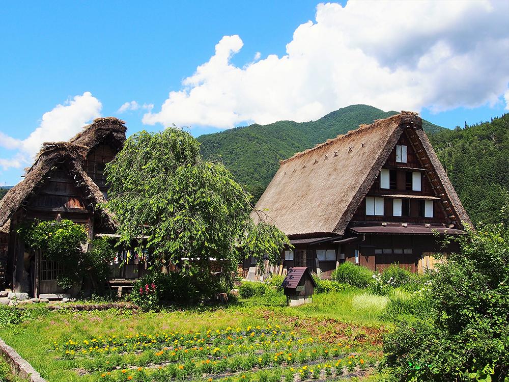 白川郷の茅葺き屋根