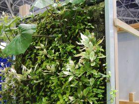 壁面緑化システム