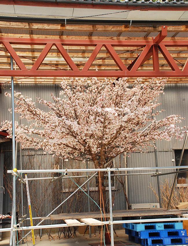 人工樹木・人工観葉樹・造花の施工例 (1)