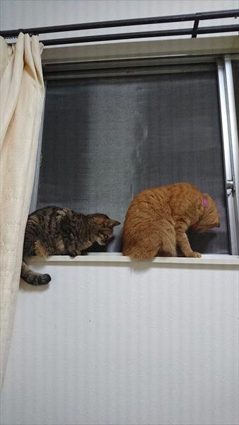 猫破れないからしょんぼり