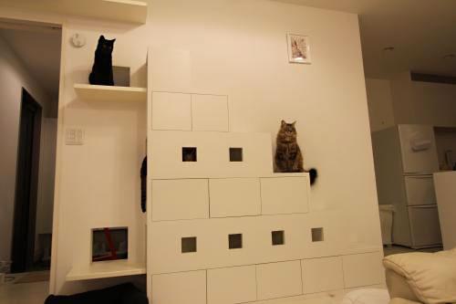猫用リビング階段の施工例24