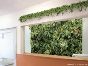 病院受付カウンターの室内緑化